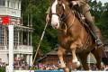 3rd International German Open Cavalry Championship